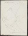 Platax teira - 1700-1880 - Print - Iconographia Zoologica - Special Collections University of Amsterdam - UBA01 IZ13500499.tif