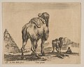 Plate 18- camel viewed from behind with pyramid at left, from 'Various animals' (Diversi animali) MET DP817873.jpg