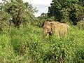 Polonnaruwa, Sri Lanka - panoramio (9).jpg