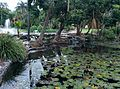 Pond in City Botanic Gardens, Brisbane, Australia.jpg