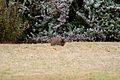 Pretoria Botanical Gardens-006.jpg