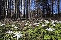 Prigorodnyy r-n, Sverdlovskaya oblast', Russia - panoramio (106).jpg