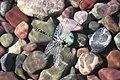 Pronghorn Clubtail Dragonfly.jpg