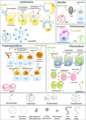 Protozoan parasites and their viral endosymbionts.webp