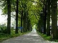 Punthorst-20090425.JPG