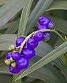 Purple Berries-1+ (2631525585).jpg
