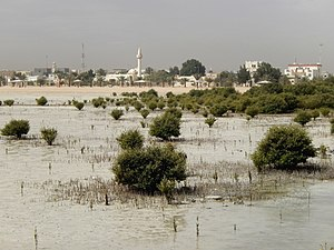 Flora of Qatar - Mangroves on Qatar's eastern shore.