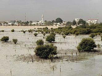 Flora of Qatar - Mangroves on Qatar's eastern shore.