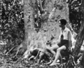 Queensland State Archives 1002 In a Pisonia Grove Green Island near Cairns c 1931.png