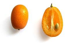 meaning of kumquat