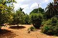 RLZ Beeri HaBanim Grove 06.JPG