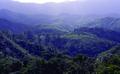 Rainforestmadagascar04.tif