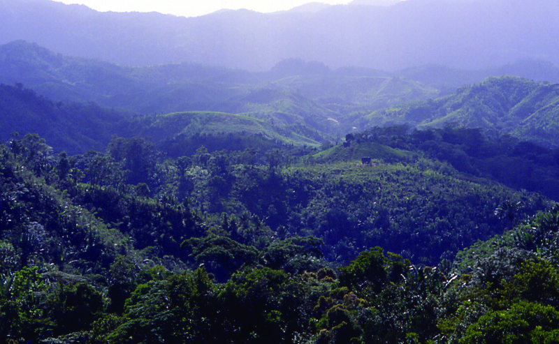 File:Rainforestmadagascar04.tif