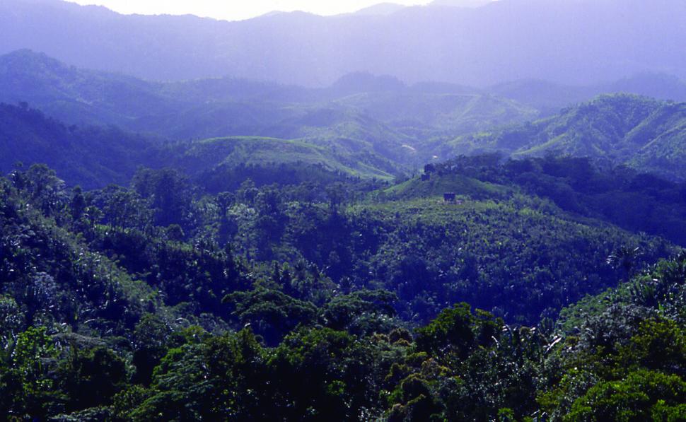 Rainforestmadagascar04