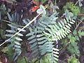 Rare plant in Mavronoros, Grevena, Greece.jpg