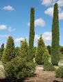 Real Jardín Botánico Juan Carlos I (RPS 07-06-2014) arboreto de coníferas.png