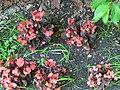Red flowers 2007.JPG