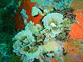 Reef life near the Matapan PA312260.JPG