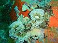 Reef life near the Matapan PA312260.JPG