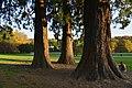 Repos au pieds des séquoias géants (22886531841).jpg