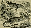 Reptiles and birds - a popular account of their various orders, with a description of the habits and economy of the most interesting (1883) (14749152331).jpg