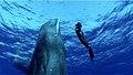 Revelation of Jonah - an official still image 3.jpg