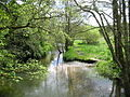 River Frome near Maiden Newton - geograph.org.uk - 94292.jpg