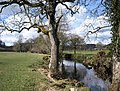 River Teign below Dogmarsh Bridge - geograph.org.uk - 1243042.jpg