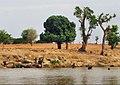 River Wudil in kano state Nigeria (River Kogin Wudil).jpg