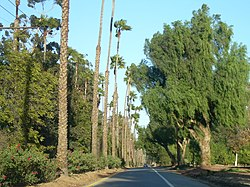 Victoria Avenue, which bisects Riverside, hosts many species of trees and plants.