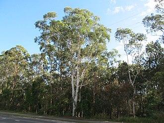 Rochedale, Queensland - Bush along Underwood Road, 2013
