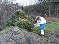 Rocky knoll - geograph.org.uk - 289940.jpg
