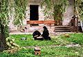Romania Suceviţa monastery 4.jpg