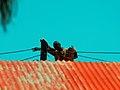 Rooftop or Pole top?.jpg