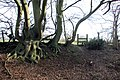 Roots and Stile - geograph.org.uk - 311642.jpg