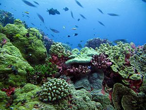 Habitat - This coral reef in the Phoenix Islands Protected Area is a rich habitat for sea life.