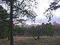 Sídliště Barrandov z lesa na Děvíně.jpg