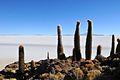 Salar de Uyuni (3997663031).jpg