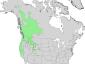 Salix lasiandra range map 3.png