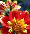 San Francisco - Golden Gate Park Conservatory Of Flowers (1105721497).jpg
