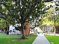San José State University - DSC03939.JPG