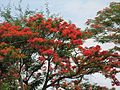 Sangam-Mekedatu bangalore nature red.jpg