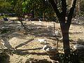 Sanjay Lake, Delhi.jpg