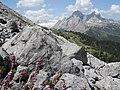 Schachenhaus&Seidelbast mit Alpspitze 2014-06-09.jpg