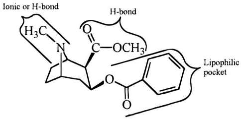 List of cocaine analogues - Wikipedia