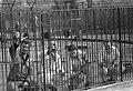 Schilders in Artis in een kooi aan het schilderen, Bestanddeelnr 911-1275.jpg