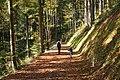 Schnifis Autumn 5.JPG