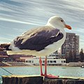 Sea Bird (19999059).jpeg