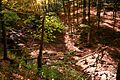 Seneca-creek-bridge - West Virginia - ForestWander.jpg