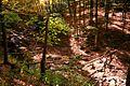 Seneca-creek-bridge - West Virginia - ForestWander.jpg